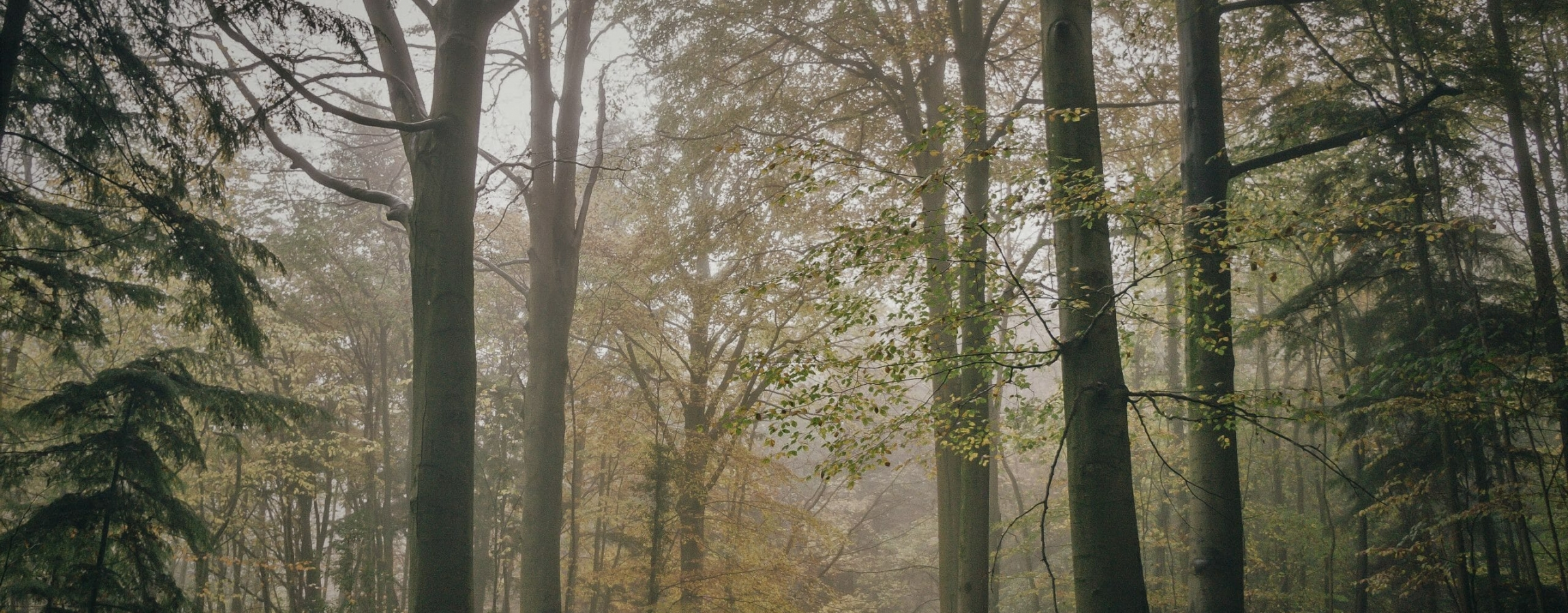 Darkened photo kriss-macdonald-YUTAkQ0ufYc-unsplash